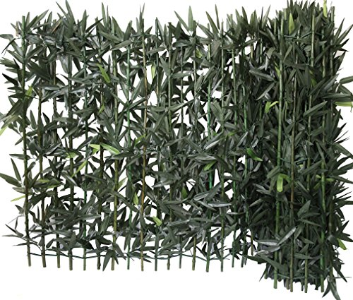 EURO CASTOR GREEN Siepe di bambú su...
