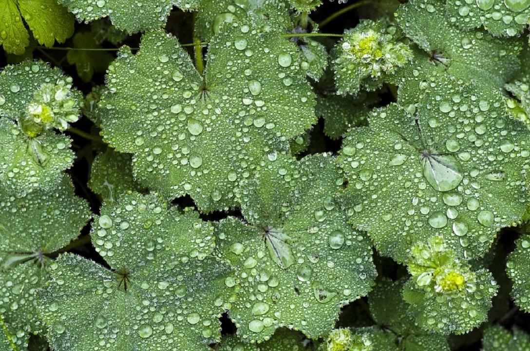Tappezzanti perenni o piante copri suolo casina mia for Piante tappezzanti perenni