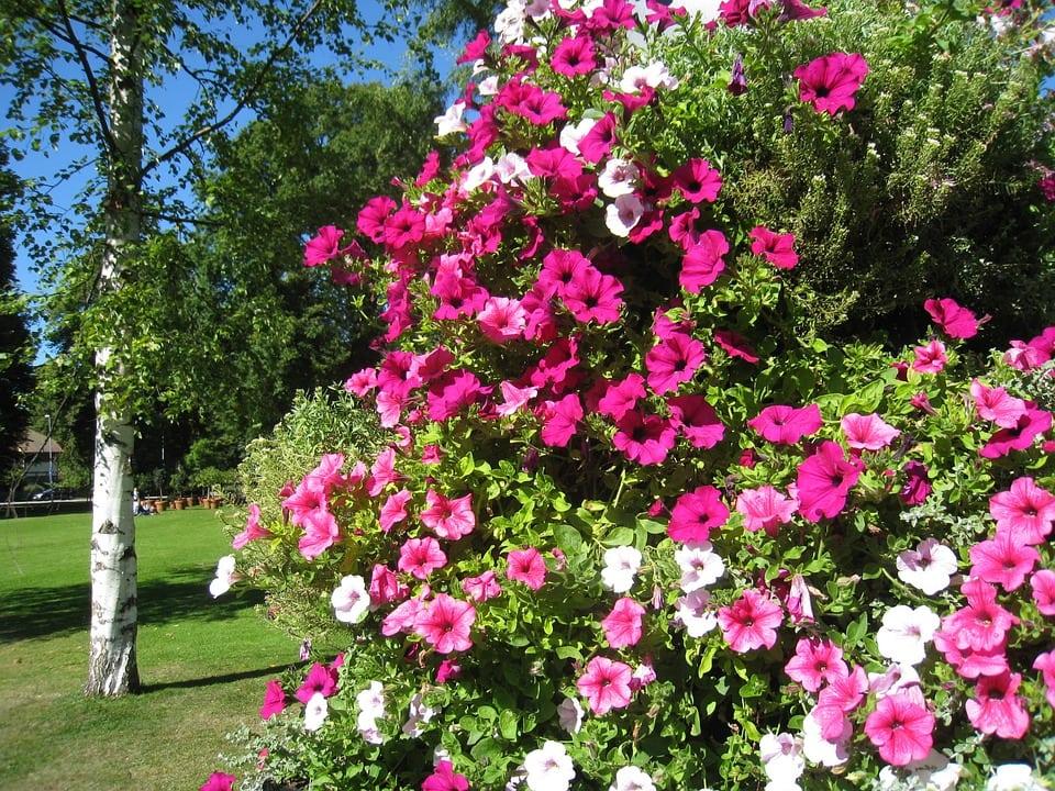 Fiori estivi un caleidoscopio di colori casina mia - Fiori da giardino estivi ...