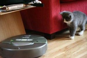 il robot ed il gattino