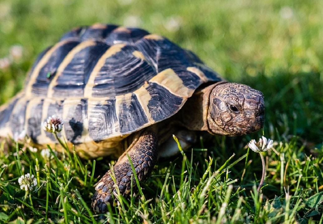 tutto sulle tartarughe allevamento cura e salvaguardia