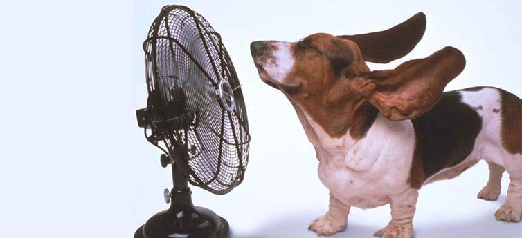 Ventilatore per lestate - Raffrescatore evaporativo domestico: i migliori, opinioni e recensioni per scegliere un prodotto top!