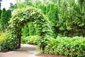 arco con rampicanti 300x200 - Piante rampicanti resistenti al freddo e al caldo, alcune idee per il tuo giardino