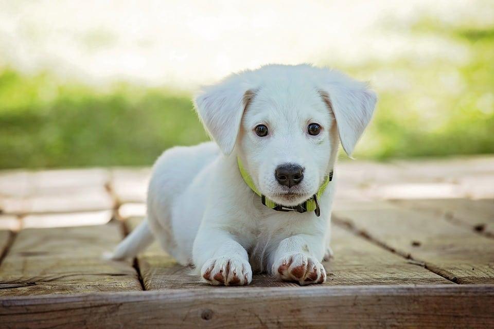 Schema Elettrico Ultrasuoni Per Cani : ᐅ ultrasuoni per non far abbaiare i cani u migliori antiabbaio