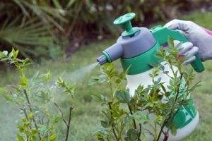 Ormone Liquido da Giardino 300x200 - Miglior ormone radicante per il giardino