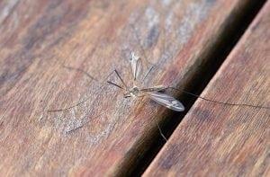 Zanzara sul Tavolo in Giardino 300x197 - La miglior zanzariera elettrica da interno ed esterno ecologica ed efficace