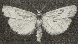 Falena della Dispensa 300x170 - Vermi bianchi e farfalline in casa? Come eliminare le tarme del cibo con rimedi naturali