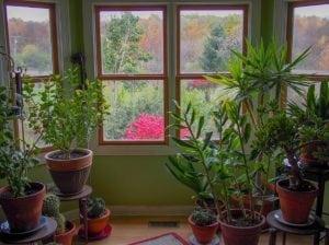 Piante da appartamento e da interno scopri le pi belle e - Piante da interno resistenti ...
