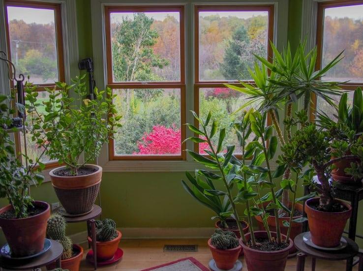 Piante da bagno poca luce. awesome piante dal fusto intrecciato with