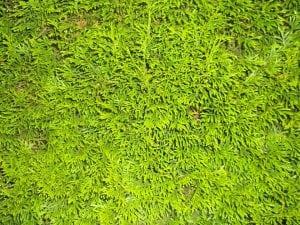 Siepe Verde Artificiale 300x225 - Siepe artificiale: crea atmosfere suggestive nei tuoi spazi esterni