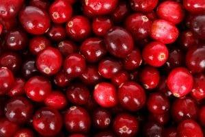bacche rosse 300x200 - Pungitopo coltivazione: come coltivare la pianta decorativa del Natale dai grandi benefici ed usi insospettabili