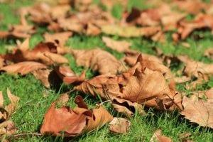 foglie cadute sul prato 300x200 - Soffiatore a batteria: come scegliere il migliore per pulire velocemente svariate superfici