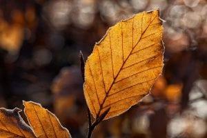 foglie che stanno per cadere 300x200 - Soffiatore a batteria: come scegliere il migliore per pulire velocemente svariate superfici