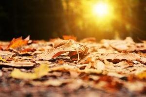 tappeto di foglie secche 300x200 - Soffiatore a batteria: come scegliere il migliore per pulire velocemente svariate superfici