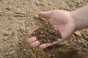 feritilizzare la terra con il compost 300x199 - La miglior compostiera da giardino per creare un ottimo fertilizzante naturale
