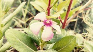 fertilizzare i fiori da giardino 300x169 - La miglior compostiera da giardino per creare un ottimo fertilizzante naturale