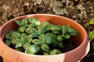 utilizzare il compost come fertilizzante 300x200 - La miglior compostiera da giardino per creare un ottimo fertilizzante naturale