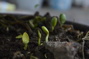 utilizzare il compost per la semina 300x199 - La miglior compostiera da giardino per creare un ottimo fertilizzante naturale