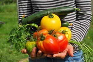 verdure dellorto 300x201 - La miglior compostiera da giardino per creare un ottimo fertilizzante naturale