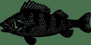 pesce merluzzo 300x150 - Qual è l'olio di fegato di merluzzo della migliore marca?
