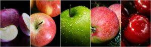 mele diverse 300x93 - Il melo: consigli pratici per crescere una pianta sana e rigogliosa, anche in vaso