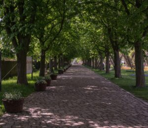 vialetto pietra 300x260 - Pietre per esterni: caratteristiche e soluzioni per la pavimentazione