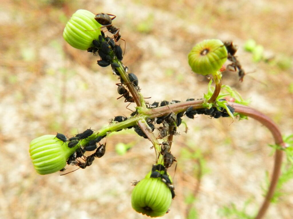 eliminare le formiche dalle piante 1024x768 - Come eliminare le formiche dalle piante: consigli e rimedi naturali