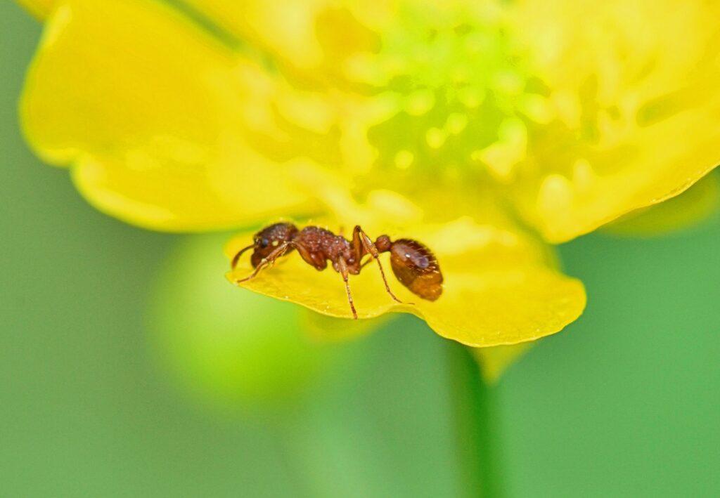 formica su petalo di fiore 1024x709 - Come eliminare le formiche dalle piante: consigli e rimedi naturali
