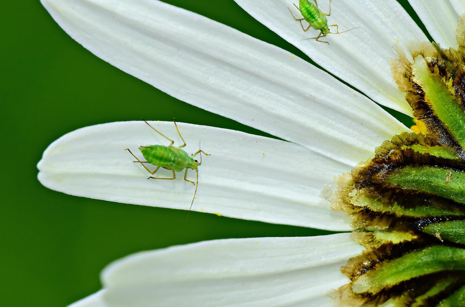 Come Far Morire Una Pianta ᐅ rimedi naturali aceto pidocchi piante • guida completa