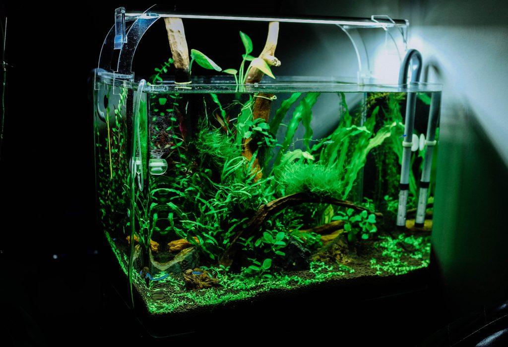 acquario con acqua demineralizzata