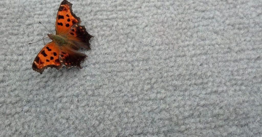 tappeto esterno