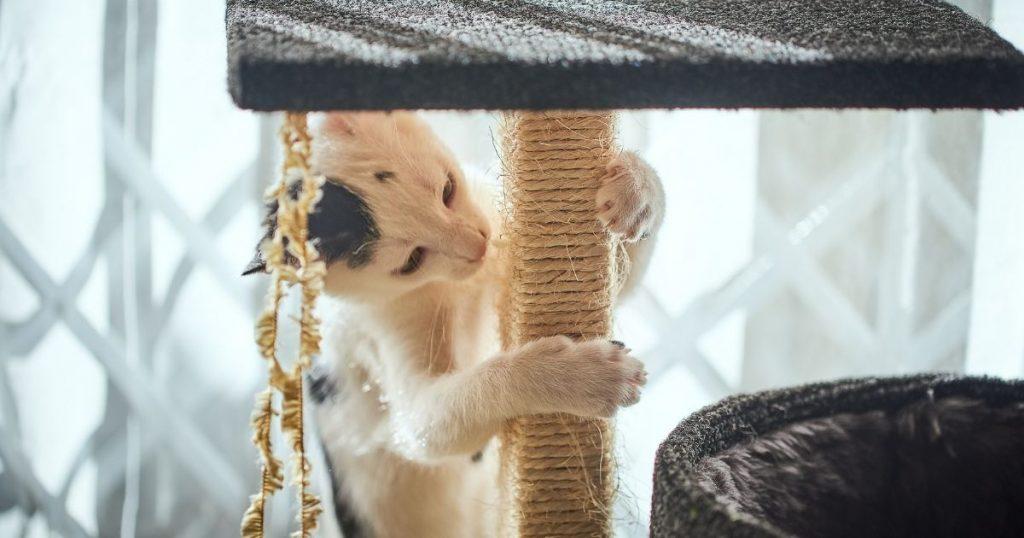 tiragraffi grandi per gatti da invogliare