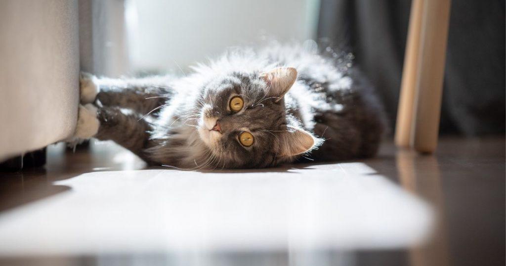 tiragraffi grande per gatti per istinto