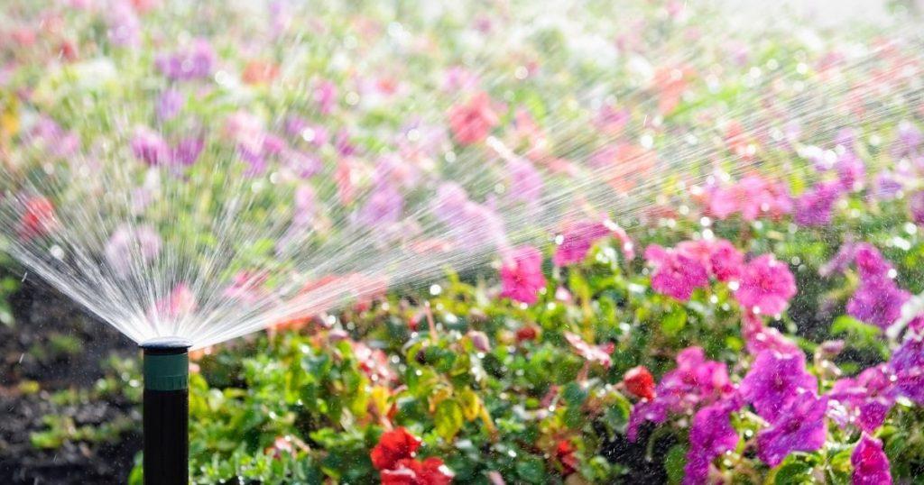 come irrigare le piante in vacanza