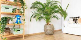 piante d'arredamento
