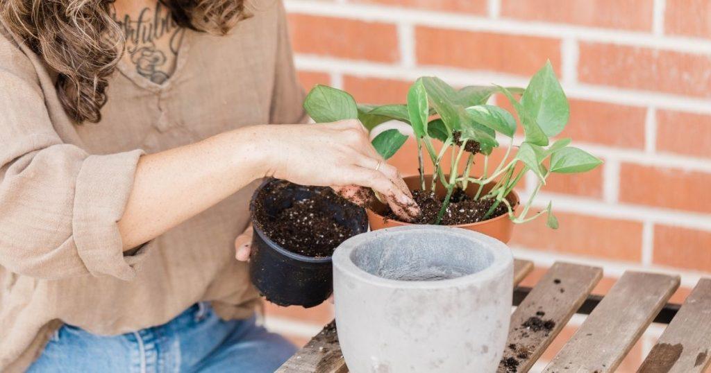 rinvasare una pianta